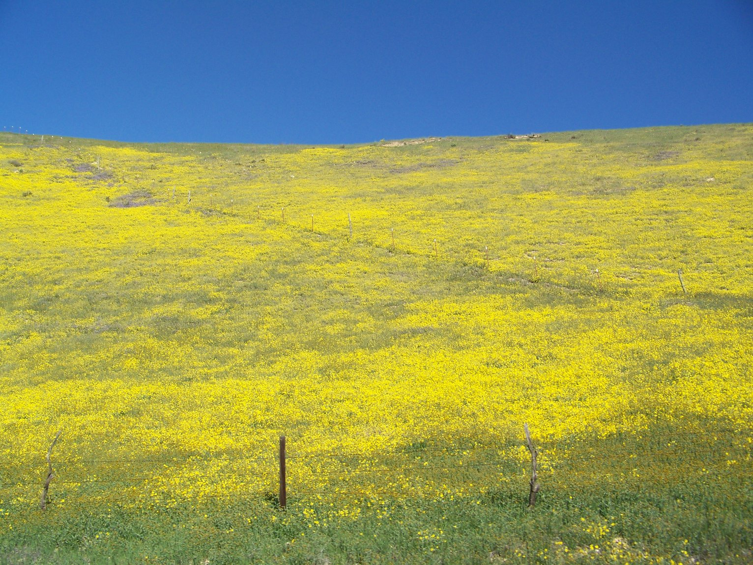 the carrizo plain